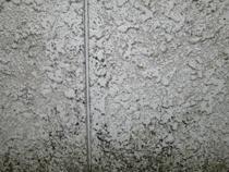 カビ・コケ・藻
